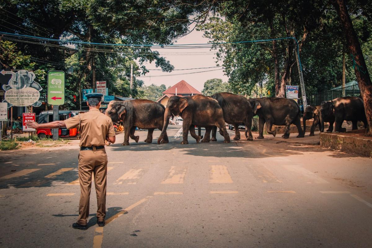Kriski Plus Beste reisperiode Sri Lanka