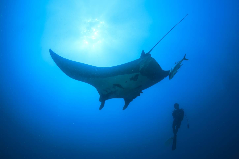 Snorkelen en duiken in de mooiste plekken van de oceaan Ontmoet de reuzenmanta Kriski Plus