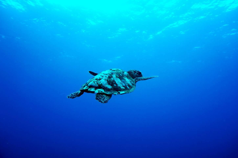 Snorkelen met schildpadden op Gili Air Tropisch genieten op een mini paradijsje Kriski Plus