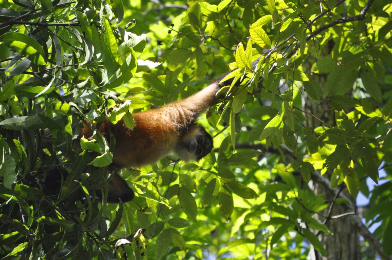 La Isla Bonita Exotische dieren spotten op een onbewoond eiland Kriski Plus