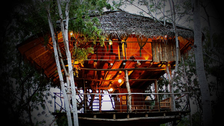 Dromen in een boomhut Logeren dicht bij de natuur Kriski Plus