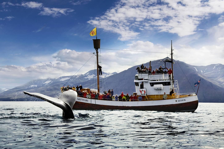 Walvissen spotten in Husavik In een traditionele eiken boot door de Skjalfandi fjord Kriski Plus