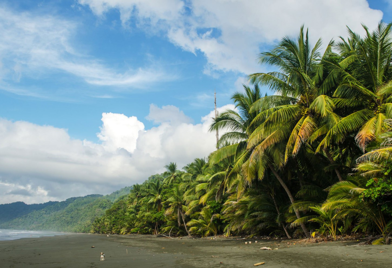 De ultieme biodiversiteit van Osa Kriski Plus