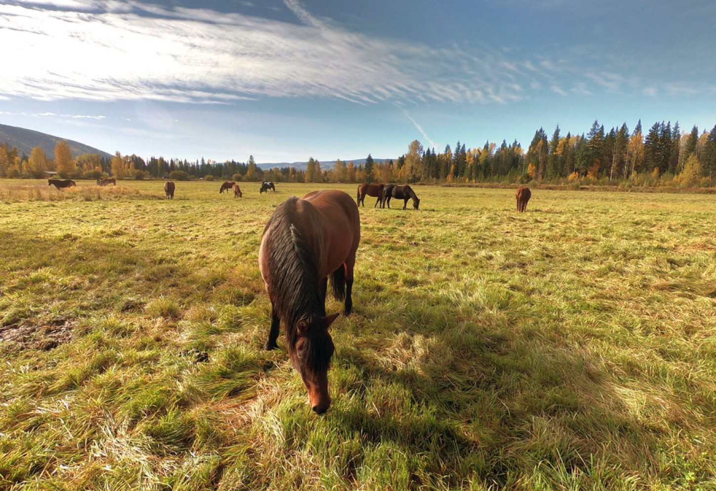 Rustieke ranch aan Wells Gray Provincial Park Kriski Plus