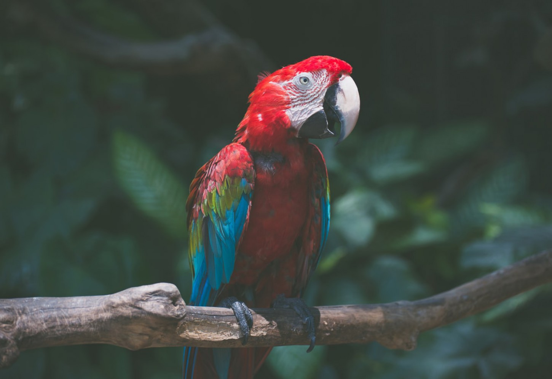 Ecoluxe in de Amazone Kriski Plus
