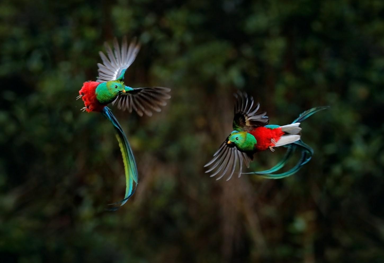 Kleurrijke Quetzales spotten Kriski Plus