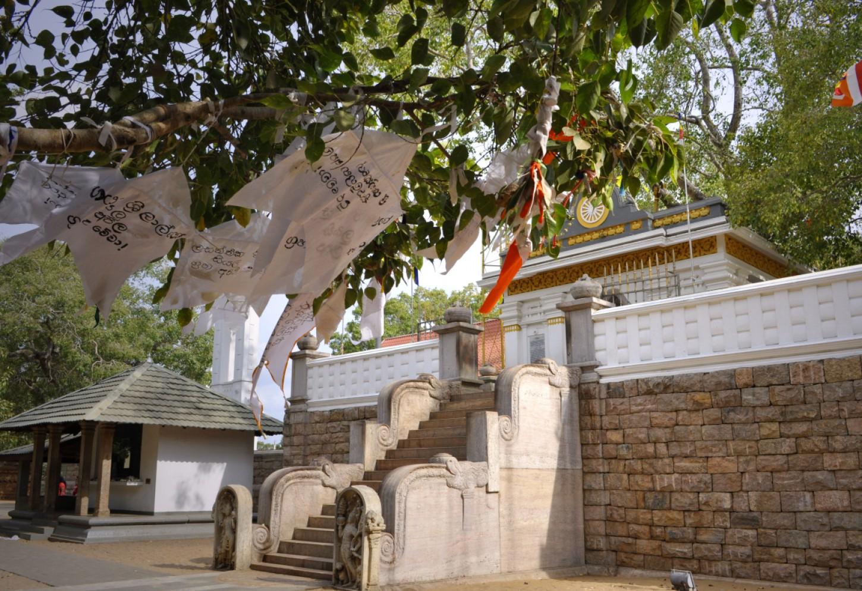 Boeddha's heilige boom Kriski Plus