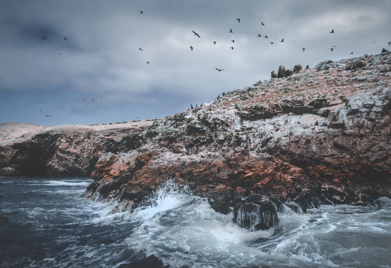 Het natuurgeweld van de Islas Ballestas Kriski Plus