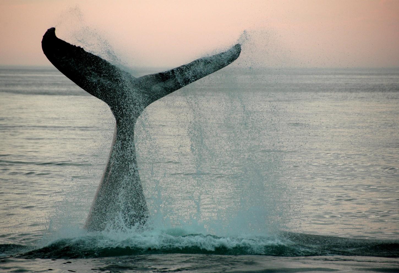 Zeilen tussen walvissen en dolfijnen Kriski Plus