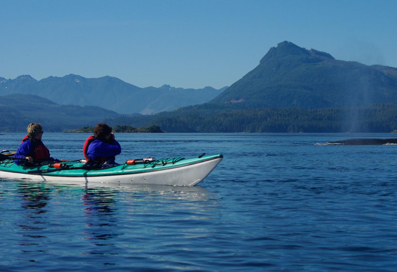 Orka's en grizzly's nabij Vancouver Island Kriski Plus