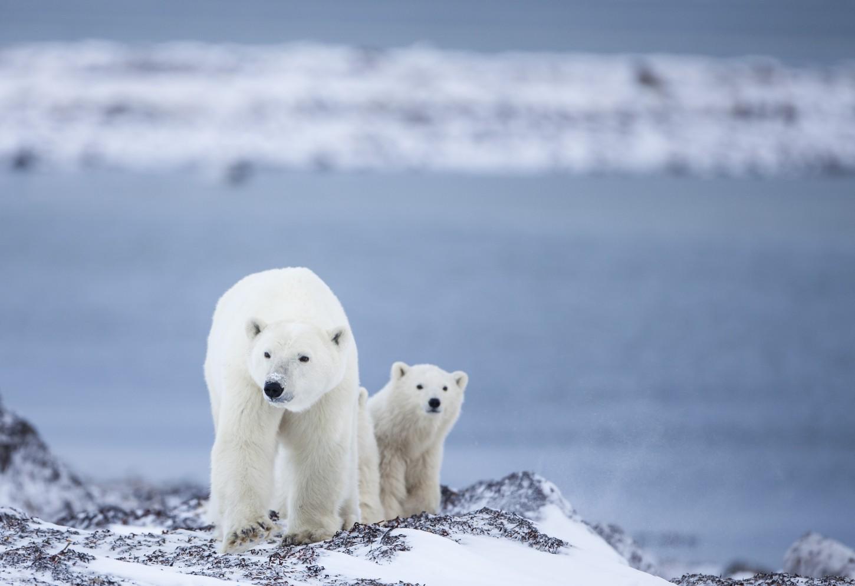 ijsberen expeditie noorderlicht canada Kriski Plus