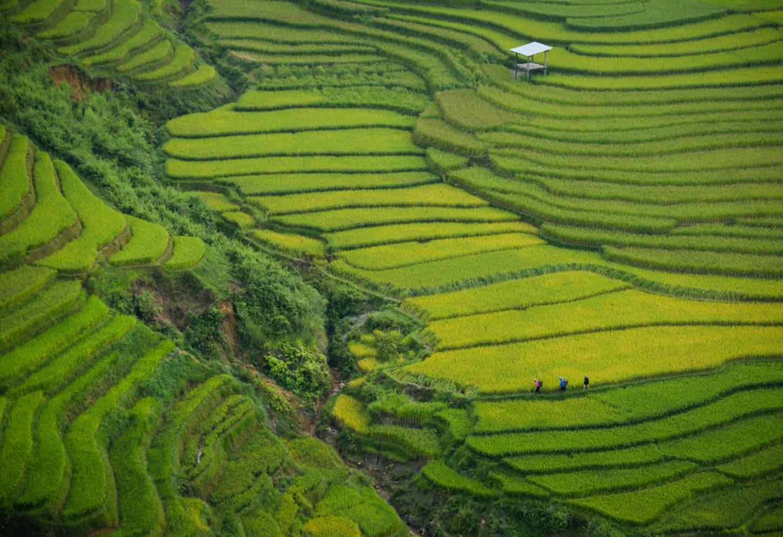 De eindeloze rijstterrassen van Sapa Kriski Plus