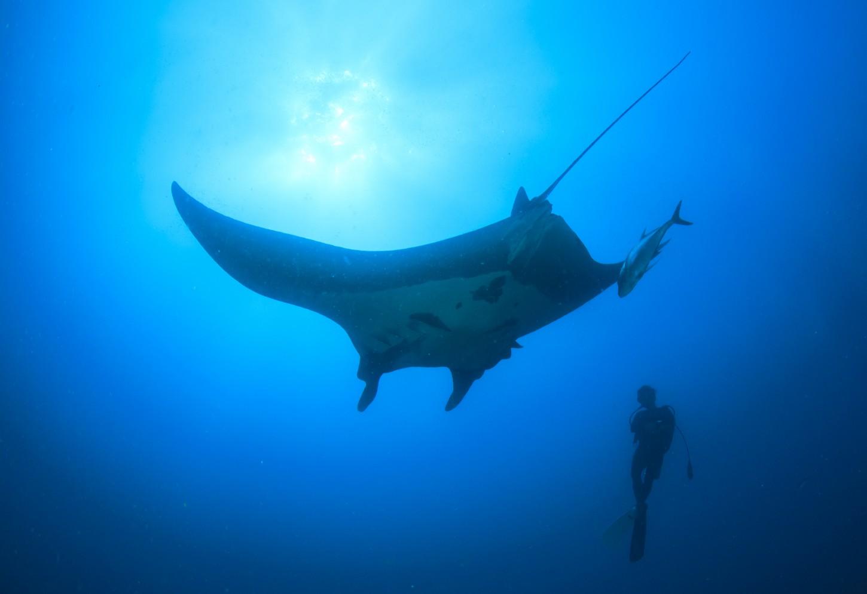 Snorkelen en duiken in de mooiste plekken van de oceaan Kriski Plus