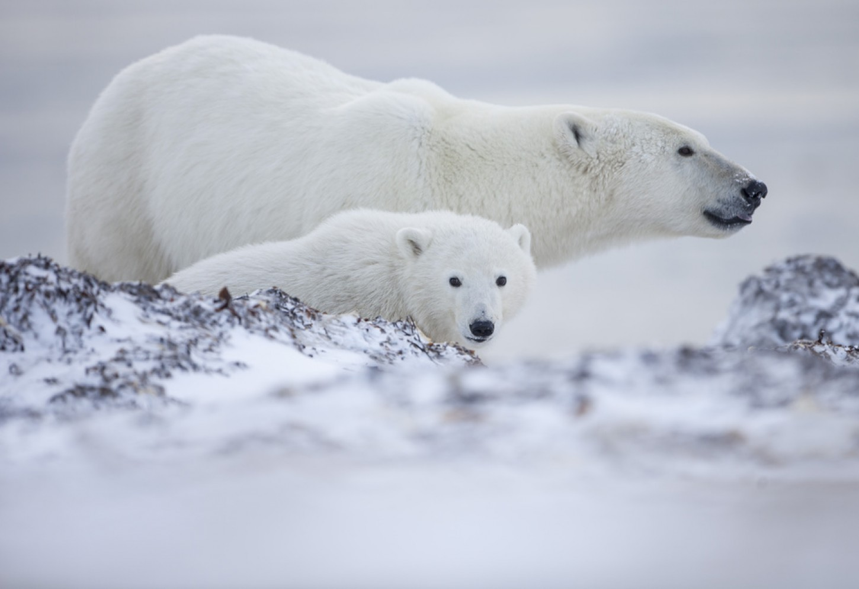 IJsberen, beluga's en het noorderlicht Kriski Plus