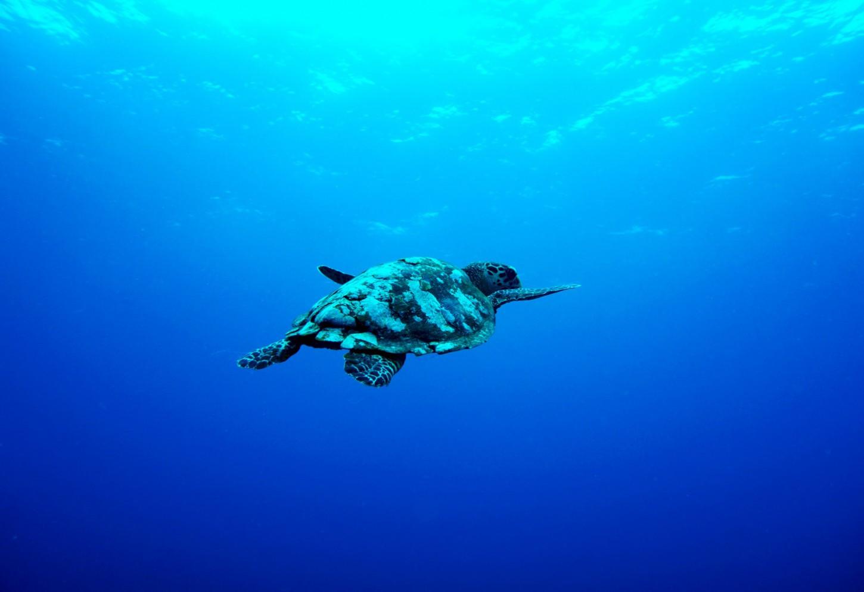 Snorkelen met schildpadden op Gili Air Kriski Plus