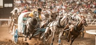 Stof bijten op grootste rodeofestival ter wereld Stoere cowboys en wilde paarden Kriski Plus